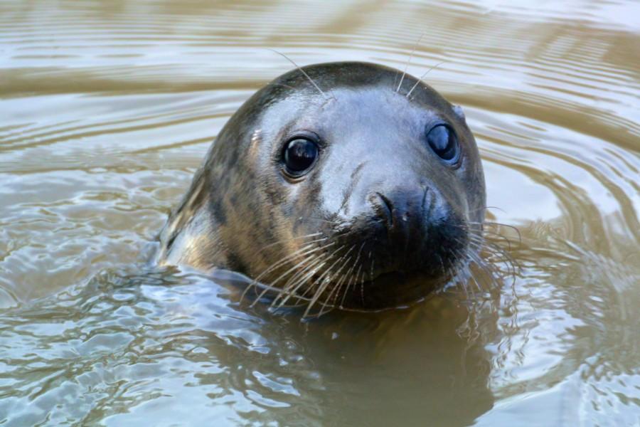 20 Grey Seal