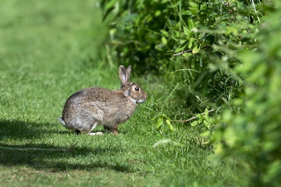 09  Rabbit
